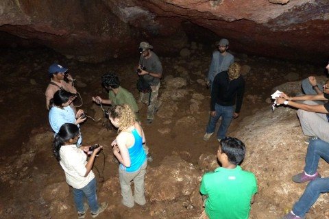 Recording echolocation calls in the cave