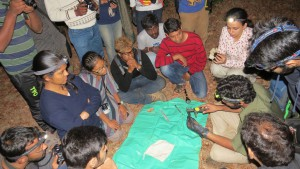 Bat_conservation_workshop_2015 (4)