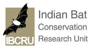 Indian Bat Conservation and Research Unit